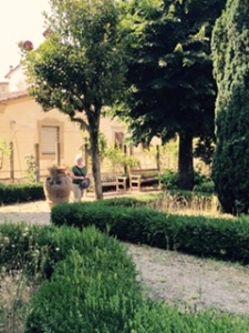 Georgio Vasari's house was extended twice to include a substantial garden now with shady trees, lavender and big pots.