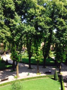 part of the glorious elm tree garden in the Ducal Palace of Mantua which sheltered many visitors on this 38degree+ day