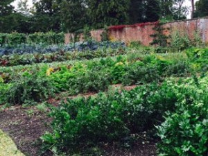 Part of the substantial vegetable garden at Down House