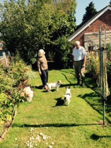 Ann Brian and staffordshire terriers Badger and Harvey in the back garden at Forge House Frinsted