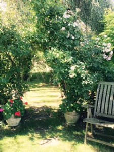 A shady spot in the Forge House garden