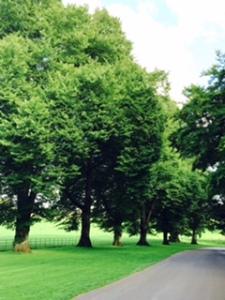 Stourhead House treelined driveway