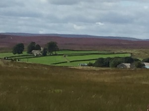 The Yorkshire dales covered in wonderful purple heath