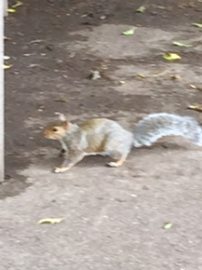 A squirrel busy in the old abbey park with all the visitors and action